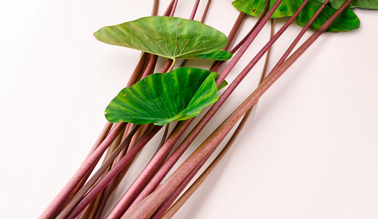 加賀野菜である赤ずいき