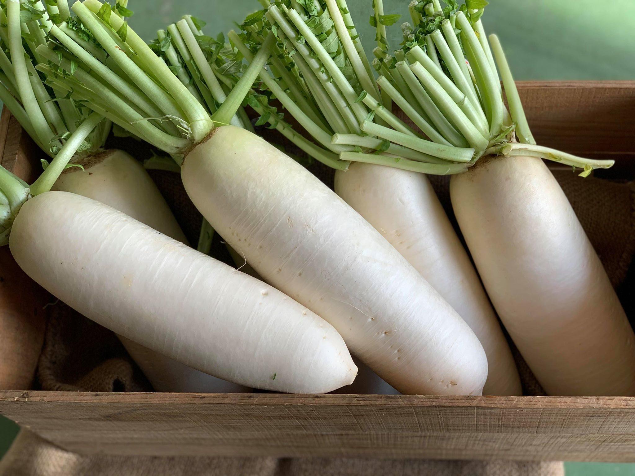 加賀野菜である源助大根